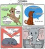 Communication Animals